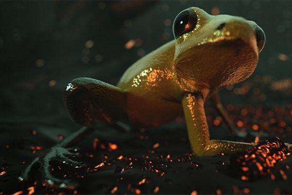 Sammakko / A frog