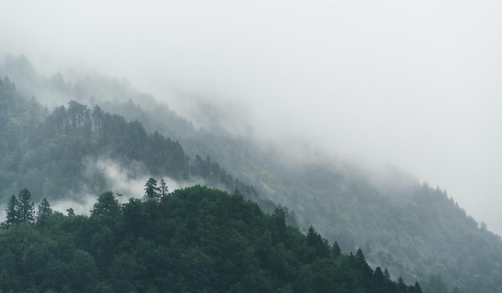 kuva sumuisesta metsästä, picture of a misty forest